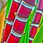 Maui's Sweet Sugar Cane by Jessica Veltri