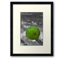 Fig-Rancho Cucamonga, Ca Framed Print