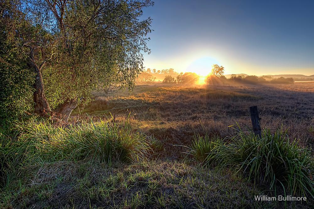 Tamborine • Queensland • Australia by William Bullimore