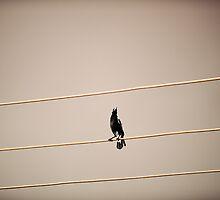 Magpie by Gwynne Brennan