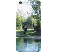 Elephant In Its Habitat iPhone Case/Skin