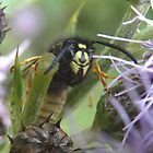 Cheeky Wasp by rhian mountjoy