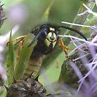 Cheeky Wasp by rhian mountjoy