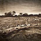 Fallen by Pene Stevens