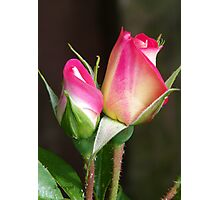 Two Rose Buds Photographic Print