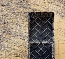 A Window in Mantua, Italy by Indrani Ghose
