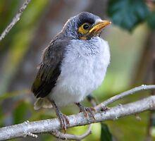 Baby Minor Bird on Branch by voir