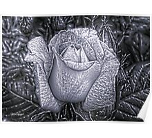 Metal Rose Poster