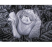 Metal Rose Photographic Print