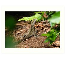 Lizard Hiding Art Print