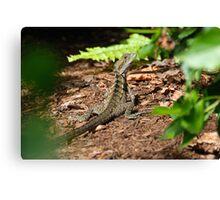 Lizard Hiding Canvas Print