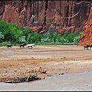 Navajo Horses Canyon de Tseyi by ten2eight