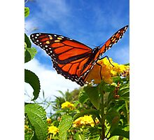 Lantana Butterfly Photographic Print