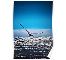 Gliding Gull! Poster