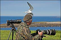 Perils of a Wildlife Photographer by ten2eight