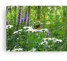 Butterfly in Paradise Canvas Print