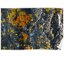 Mossy tree bark abstract Poster