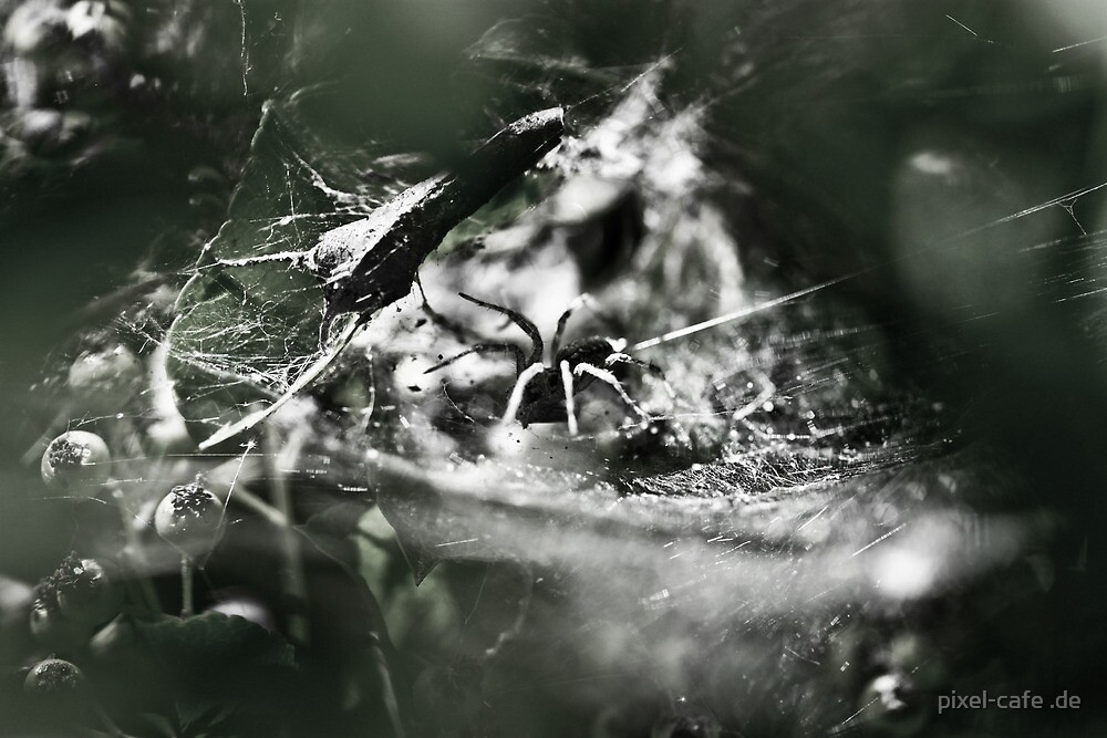 Spider by pixel-cafe .de