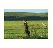Fence sitters.. Art Print