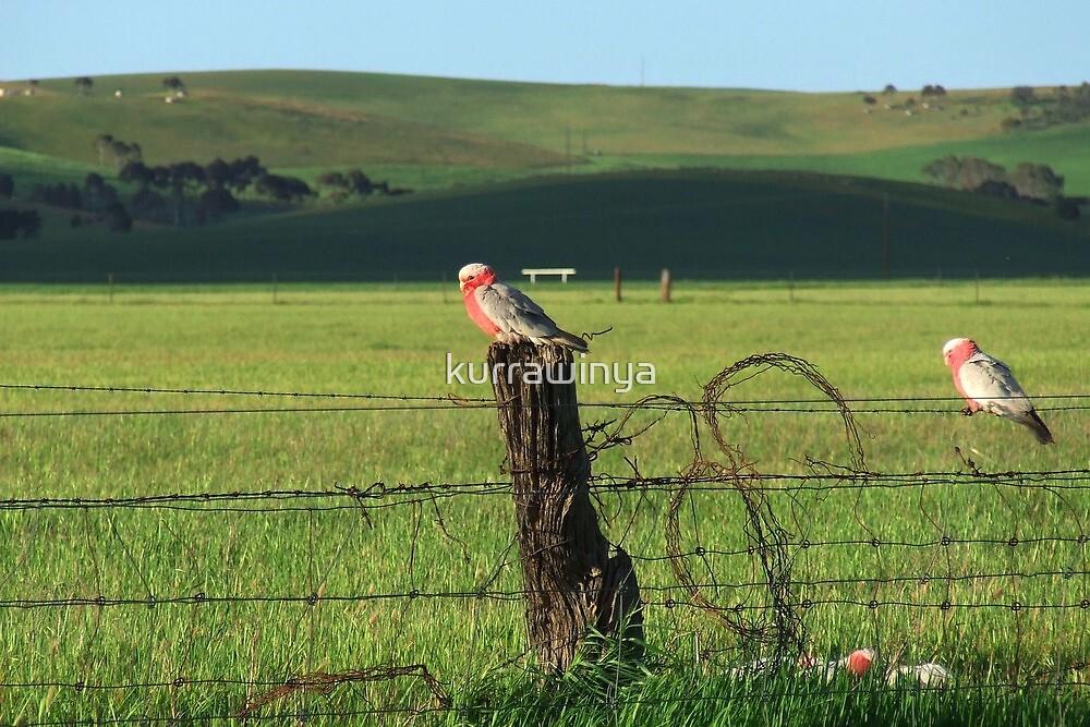 Fence sitters.. by Penny Kittel