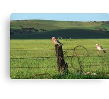 Fence sitters.. Canvas Print