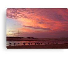 Colour Gull-ore Canvas Print