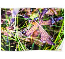 Large wilting purple flower in long grass HDR Poster