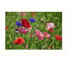 Poppies, As Is Art Print