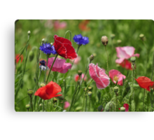 Poppies, As Is Canvas Print