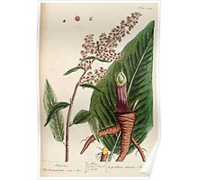 A curious herbal Elisabeth Blackwell John Norse Samuel Harding 1739 0600 Patience Poster