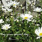 Daisy greeting card by sarnia2