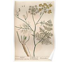 A curious herbal Elisabeth Blackwell John Norse Samuel Harding 1739 0096 Fennel Poster