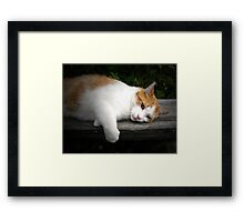 Cat on a hot wooden bench Framed Print
