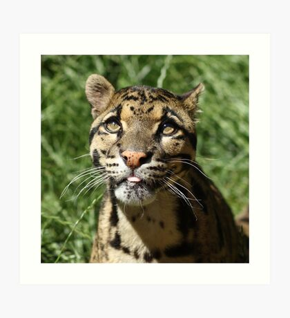 Wild Cat - Wildlife Heritage Foundation Art Print