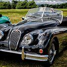 Jaguar XK140 by Adrian Evans