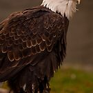 Bald Eagle by Rick Montgomery