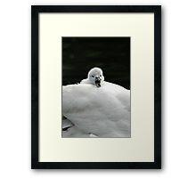 Oi!....... Mister Framed Print