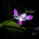 Flower at Night by paintbrush