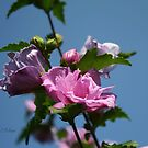 Buds and Blue Skies by Cathy O. Lewis