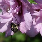Busy Bee by Cathy O. Lewis