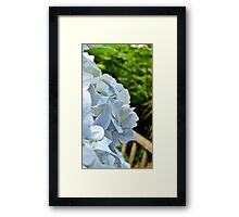 Flower Close up Framed Print