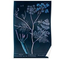 A curious herbal Elisabeth Blackwell John Norse Samuel Harding 1739 0096 Fennel Inverted Poster