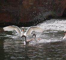 Splashdown! by FelicityB