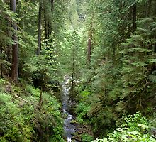 Crossing the Barnes Creek by Lucinda Walter