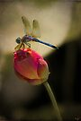 Lotus Bud and Dragonfly On the Lily Pond by Chris Lord