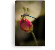 Lotus Bud and Dragonfly On the Lily Pond Canvas Print