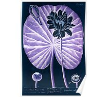 A curious herbal Elisabeth Blackwell John Norse Samuel Harding 1739 0622 The White Water Lilly Inverted Poster
