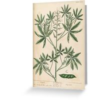 A curious herbal Elisabeth Blackwell John Norse Samuel Harding 1739 0082 Lupin Greeting Card