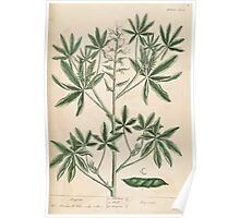 A curious herbal Elisabeth Blackwell John Norse Samuel Harding 1739 0082 Lupin Poster