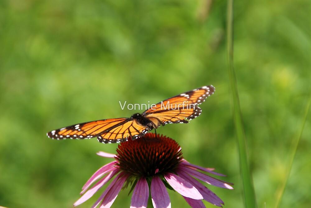 Open Wings by Vonnie Murfin